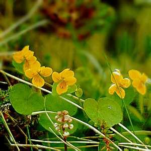 Botanisk vandring på Sølendet naturreservat