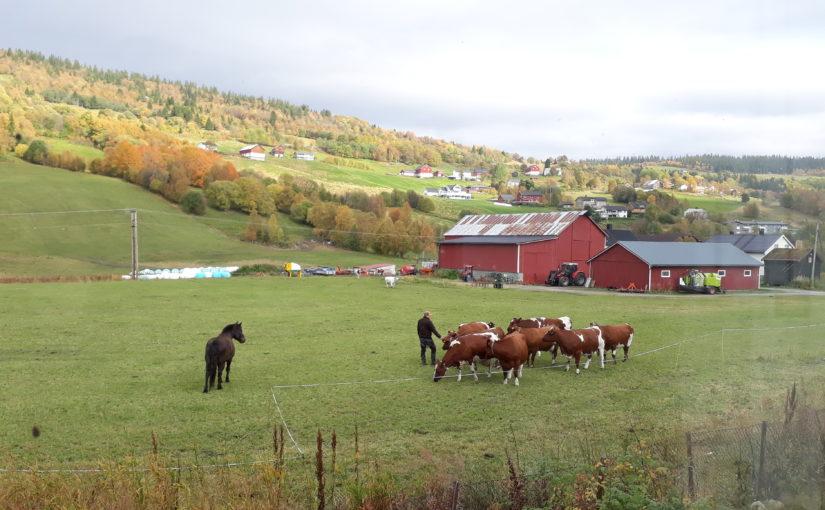 Regionale miljøtilskudd til jordbruket i Trøndelag 2018