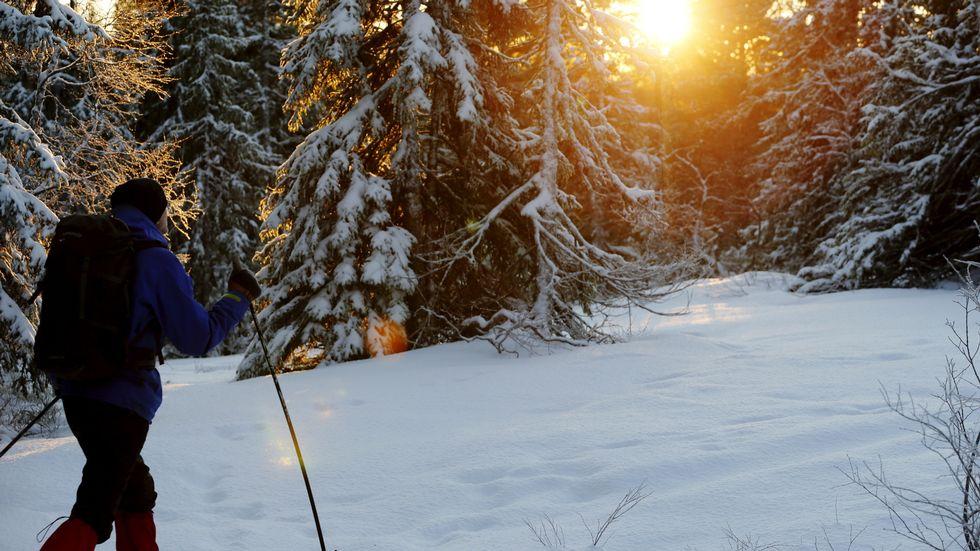 Turist på ski