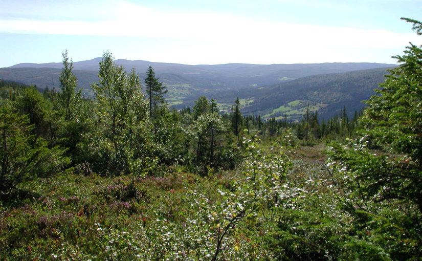 Tilskudd til helsefremmende og forebyggende arbeid i Trøndelag