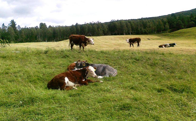 Frist for å søke om produksjonstilskudd i jordbruket –  del 1: