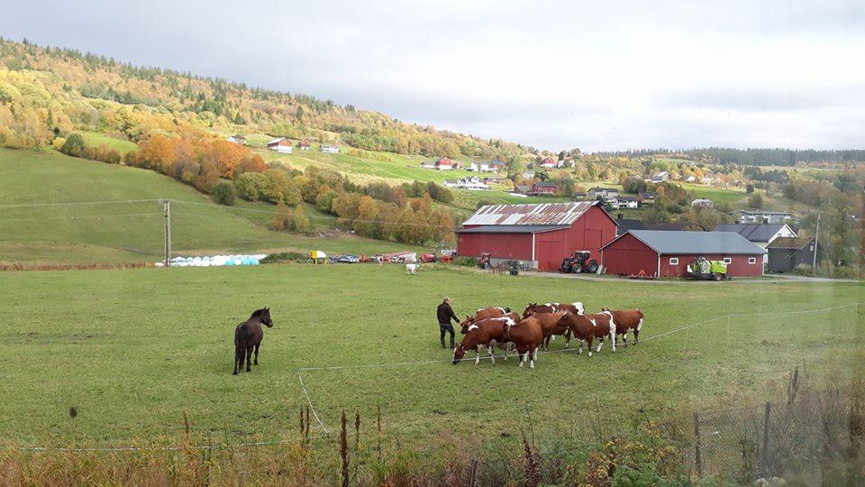 Foto: Inger Grøtli