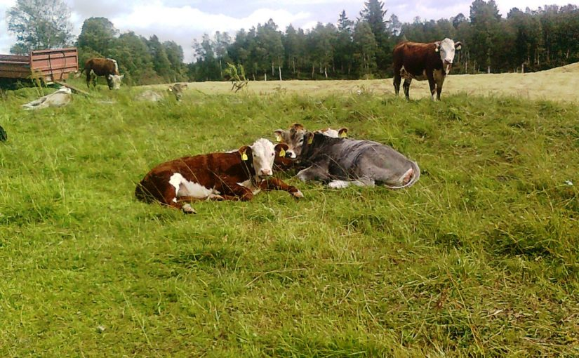 Biogass i Fjellregionen