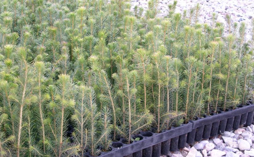 Tilskuddsmidler til skogplanting snart oppbrukt