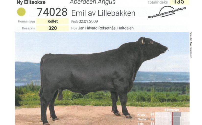 Eliteokse i Haltdalen – Emil av Lillebakken