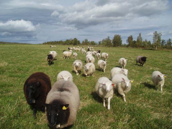 Landbruksnytt