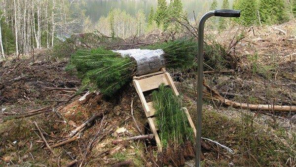 Tilskudd i skogbruket 2019