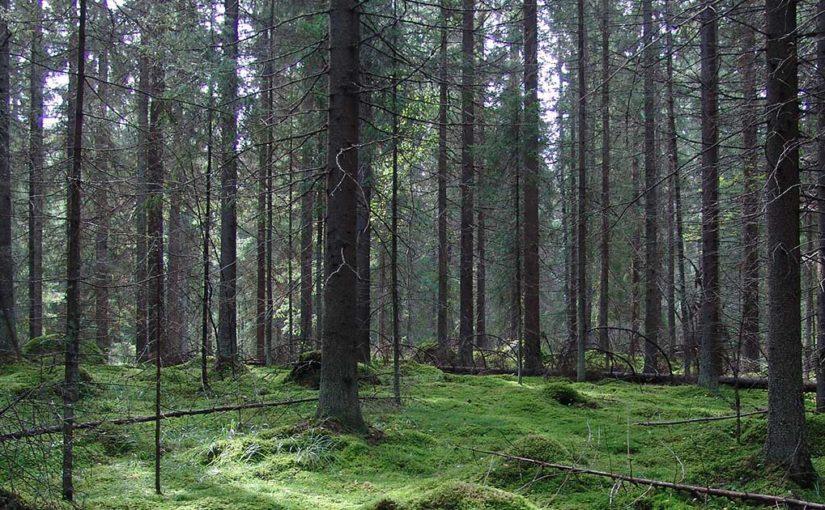 Skogskolens første lansering: nettkurs i planting