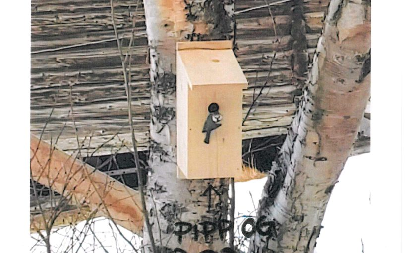 2.klasse som laget fuglekasser – Pipp og Popp